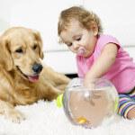 pet urine removal whatcom county
