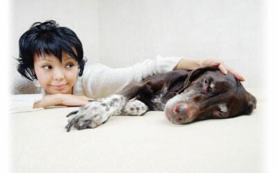 Man's Best Friend, Carpets Biggest Foe