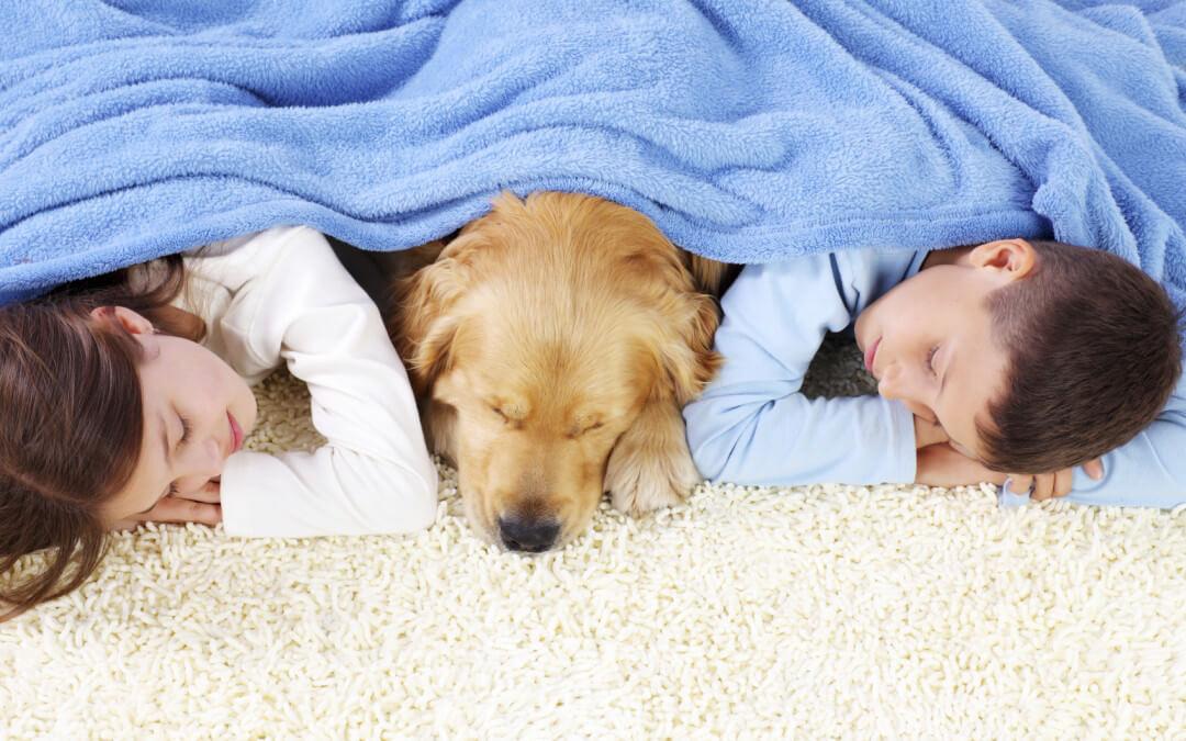 Best Carpets For Kids & Pets