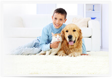 Carpet pet urine removal