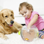 pet urine removal whatcom county