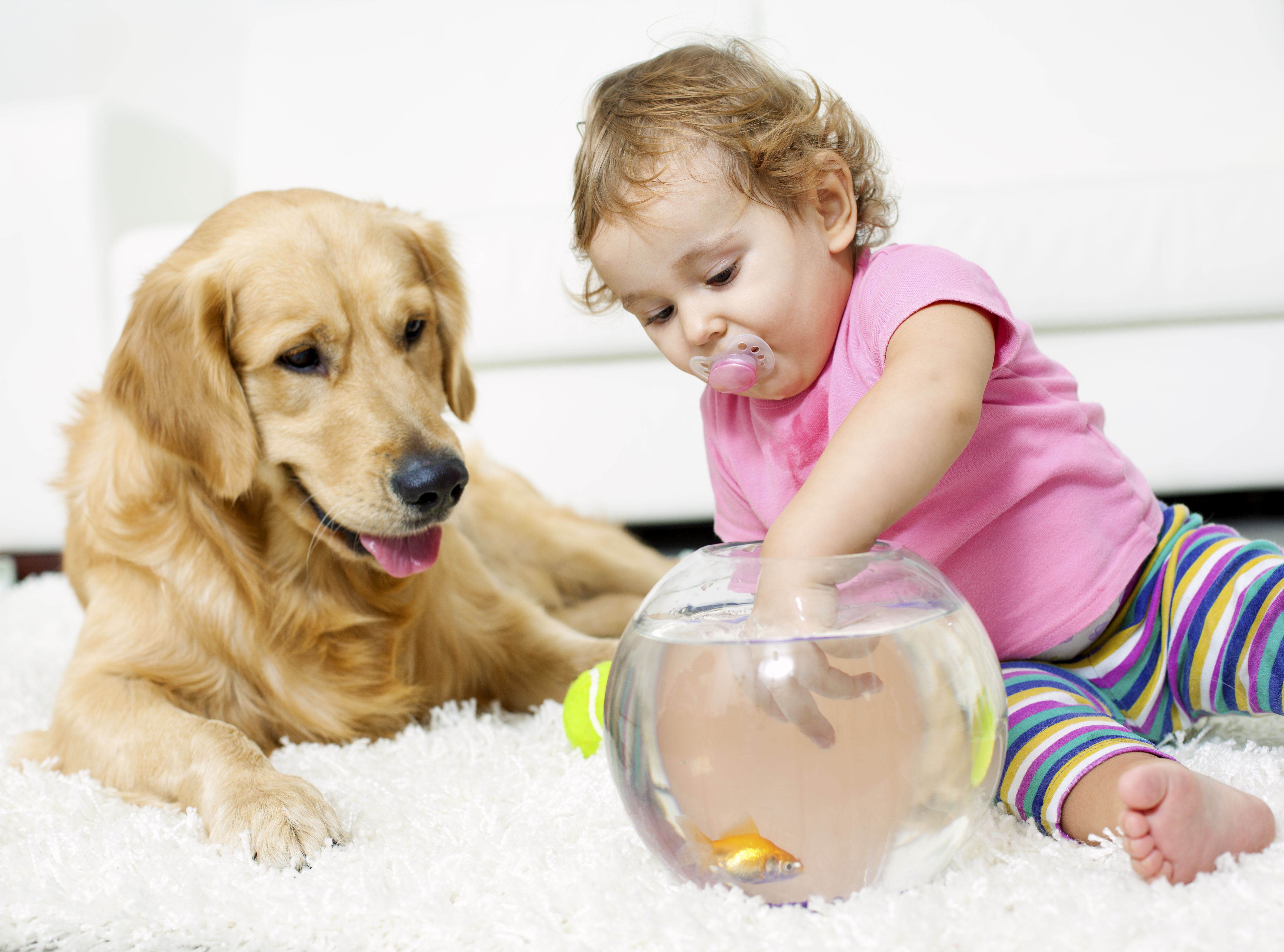 Carpet Cleaning Solutions For Pets John S Chem Dry