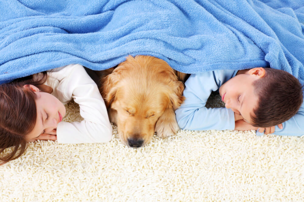 best carpets for kids pets john 39 s chem dry of whatcom county. Black Bedroom Furniture Sets. Home Design Ideas